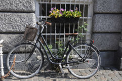 BICYCLE PARKED WITH WINDOW WITH FLOWERS Royalty Free Stock Photography