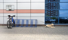 Bicycle parking and dog Royalty Free Stock Photos
