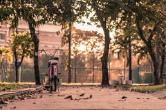 A bicycle. Parking bicycle among trees in the park Stock Photography