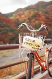 Bicycle on the parol. Fall is very colorful season of Japan. Fall Season of Kyoto is very good timing to see Japan Royalty Free Stock Images