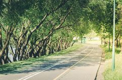 Bicycle path along the park avenue/bicycle path along the park a royalty free stock image