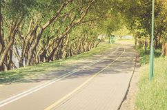 bicycle path along the park avenue/bicycle path along the park avenue in sunrise royalty free stock images