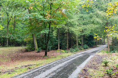 Bicycle path through autumn forest of Dutch National Park Veluwe Royalty Free Stock Photography