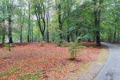 Bicycle path through autumn forest of Dutch National Park Veluwe Stock Images