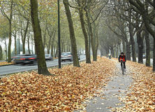 Bicycle path in Brussels Royalty Free Stock Images