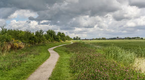 Bicycle path through dutch landscape Royalty Free Stock Photo