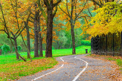 Bicycle path in an empty park royalty free stock photo