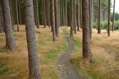 Bicycle path in forest Royalty Free Stock Photo