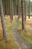 Bicycle path in forest Royalty Free Stock Images