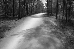 Bicycle path leading through the forest stock photo