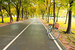 The bicycle on path of park Royalty Free Stock Photo