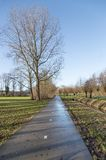 Bicycle path in wintertime with bare trees Royalty Free Stock Photo