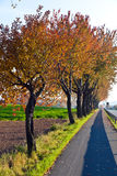 Bicycle and pedestrian lane under trees Royalty Free Stock Photo