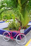 Bicycle pink in caribbean tropical Mexico Royalty Free Stock Photography