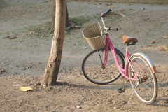bicycle pink in garden Stock Images