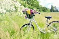 Bicycle, Plant, Flower, Grass Royalty Free Stock Photo