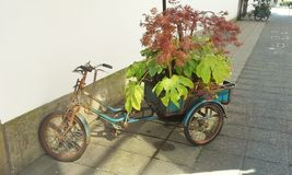 Bicycle Planter Royalty Free Stock Photo