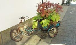 Bicycle Planter Royalty Free Stock Photo