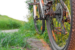 Bicycle rear view on a background of grass stock images