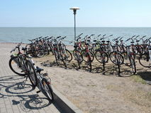 Bicycle rent Royalty Free Stock Images