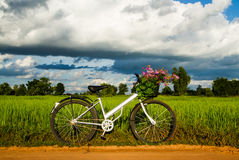 Bicycle in the rice field Stock Photo