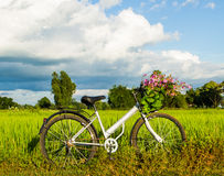 Bicycle in the rice field Stock Image