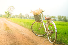Bicycle and rice field flare light Royalty Free Stock Photos