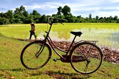 A bicycle in the rice paddies stock photo