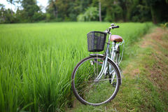 Bicycle in rice paddy, asia Stock Photo
