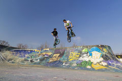 Young bmx bicycle riders. Bicycle riders in the park Royalty Free Stock Image