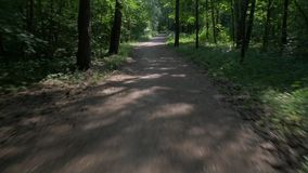 Bicycle rides along narrow path past bushy green forest. Bicycle rides along ground path past bushy forest with trees and sun rays passing through leaves stock footage