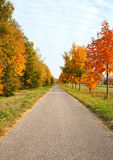 Bicycle road in autumn Stock Photos