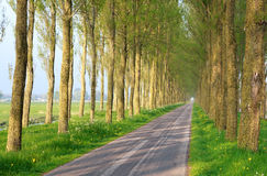 Bicycle road between trees Stock Photography