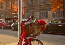 The red bicycle with a red rose. Red bicycle with basket decorated with a red rose in the basket autumn day with a warm and smooth light during the sunset royalty free stock photo