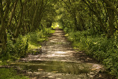 Bicycle route trail Stock Photography