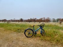 Bicycle on the side of white Thatch grass flower field Royalty Free Stock Photography