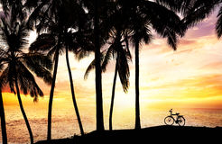 Bicycle silhouette on the beach. Near palm trees and ocean at sunset sky background in India stock photography
