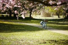 Bicycle on Small Path in the Park Royalty Free Stock Photos