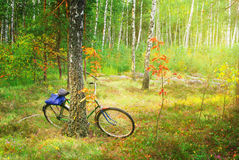 Bicycle in spring forest Royalty Free Stock Photo