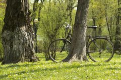 Bicycle in a spring park on a green grass under tree stock image