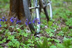 A bicycle is standing by a tree in the forest stock photo