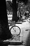 Bicycle in the sun Royalty Free Stock Photos