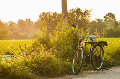 Bicycle at sunny day royalty free stock images