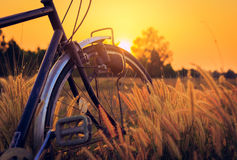 Bicycle at sunset in the park. Bicycle and grass at sunset in the park Stock Images