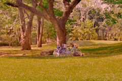 Bicycle taken from under a tree in the distance Royalty Free Stock Images