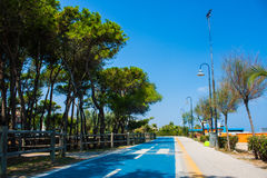 Bicycle track on the adriatic sea coast. Seashore of city Alba Adriatica in Italy, Pine trees on the side, summer sunny day. Stock Photo