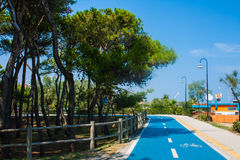 Bicycle track on the adriatic sea coast. Seashore of city Alba Adriatica in Italy, Pine trees on the side, summer sunny day. Royalty Free Stock Photo