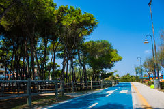 Bicycle track on the adriatic sea coast. Seashore of city Alba Adriatica in Italy, Pine trees on the side, summer sunny day. Stock Images