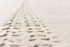 Bicycle tracks on the sand stock photo