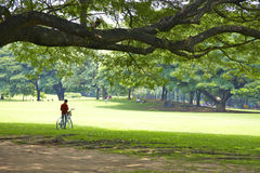 Bicycle and tree Stock Photo